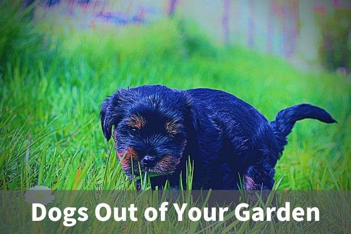 Dogs Out of Your Garden